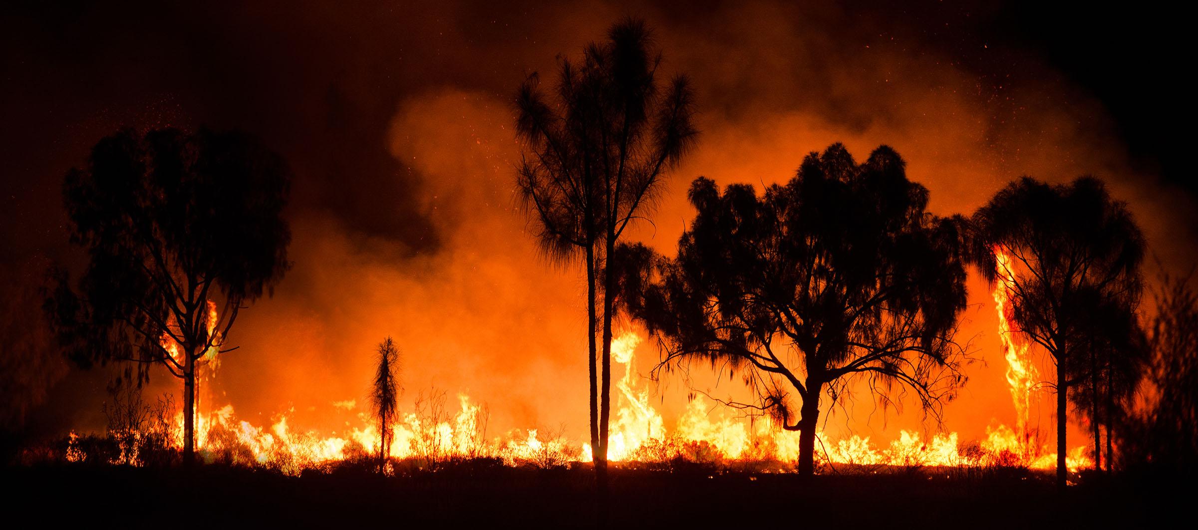 Raising Money for Australian Bushfire charities